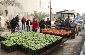 خيرات فلسطين في حسبة أريحا صباح اليوم