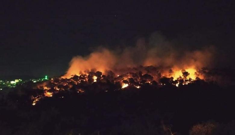 النيران تلتهم 850 شجرة زيتون وحرجية في جنين