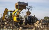 مستوطنون يقتلعون اشجار زيتون في الخليل