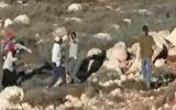 المستوطنون يهاجمون المواطنين في سلفيت