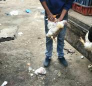 ضبط 700 كيلو دجاج غير صالحة للاستهلاك الآدمي في الخليل