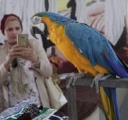 معرض الزهور والطيور في نابلس