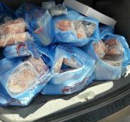 اتلاف دجاج فاسد