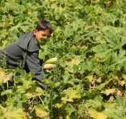 المزارعين في قطاع غزة
