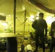 ضبط مستنبت للمخدرات في الظاهرية بالخليل