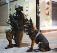 كلب اسرائيلي ينهش رقبة طفل من مخيم جنين