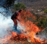مستوطنون يحرقون اشجار زيتون في نابلس