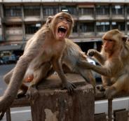 2020-03-20t110900z_1367692753_rc2nnf9xm337_rtrmadp_3_health-coronavirus-thailand-monkeys-840x540