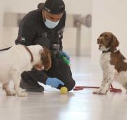 الامارات والكلاب البوليسية وفيروس كورونا