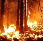 النيران وحرائق اللاذقية