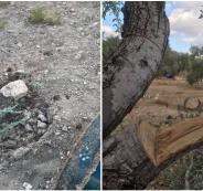 اقتلاع اشجار في راس كركر
