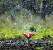 السجن عامين لمزارع من جنين بتهمة ري مزروعاته بالمياه العادمة
