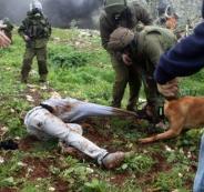 فلسطيني يقاضي شركة هولندية تورد كلابا لجيش الاحتلال