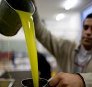 موعد تصدير زيت الزيتون الفلسطيني الى الاردن