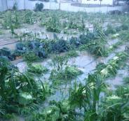 المزارعين المتضررين من الأحوال الجوية