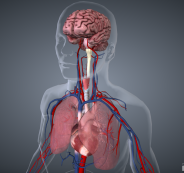 الإنسان يمكنه أن يعيش بدون رئة! هذه أعضاء جسمك التي يمكنك الاستغناء عنها