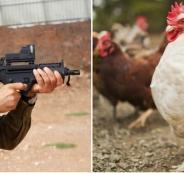 الجيش الاسرائيلي والديوك والدجاج