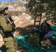 اعتقال طفل ووالده أثناء قطافهما للزيتون في عزون شرق قلقيلية