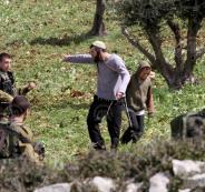 مستوطنون يسرقون أشجار زيتون جنوب نابلس