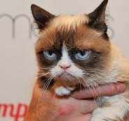 وفاة أشهر قطة عابسة في العالم