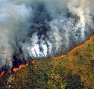 فلسطين وحرائق غابات الامازون