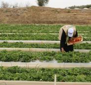 منحة مالية للمزارعين في قطاع غزة
