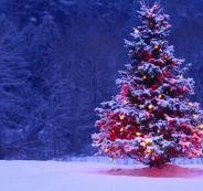 خبير مصري: شجرة عيد الميلاد مصرية الأصل!