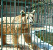 اغلاق حديقة الحيوانات في قلقيلية