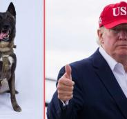 ترامب والكلب البطل