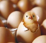 تهريب بيض في بيت لحم ى