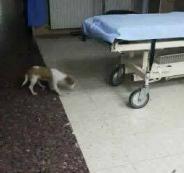 كلب في قسم الطوارئ بمستشفةى رفيديا