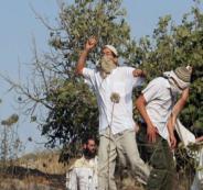 المستوطنون يهاجمون قطافي الزيتون