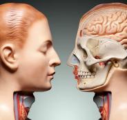 العلماء وجسم الانسان