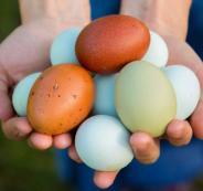 اختراع كرتونة البيض