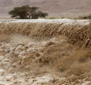 احصائية المطر في الضفة الغربية