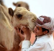 افتتاح اكبر مستشفى للابل في السعودية