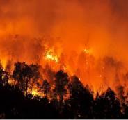 حرائق في الجزائر