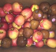 ضبط طن ونصف تفاح غير صالح للاستهلاك