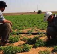 صرف تعويضات للمزارعين الفلسطينيين