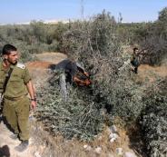 الاحتلال يخطر باقتلاع أشجار