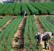 المزارع في غلاف غزة