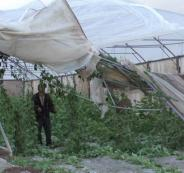 صرف تعويضات مالية لصالح المزارعين الفلسطينيين
