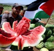 طريقة سهلة للتمييز بين البطيخ الأحمر الناضج و البطيخ غير الناضج