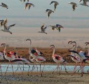 الطيور المهاجرة في اسرائيل