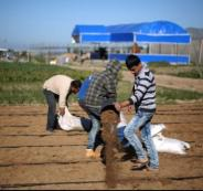 معدل البطالة في صفوف الشباب بغزة تجاوز 60%
