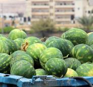 بطيخ غزة بلا طعم