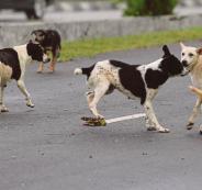 كلاب ضالة تلتهم طفلا رضيعا