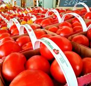 الطماطم التركي والجيش الاسرائيلي