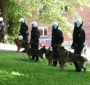 الاستخبارات الأمريكية تقيل كلبة من العمل !