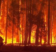 حريق غابات في أميركا